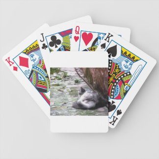 Fluffy cat sleeping crouch on the floor bicycle playing cards