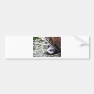 Fluffy cat sleeping crouch on the floor bumper sticker