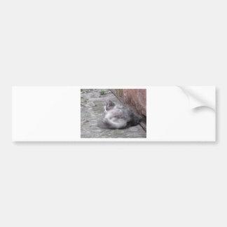 Fluffy cat sleeping crouch on the floor bumper sticker
