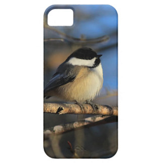 Fluffy chickadee iPhone 5 cases