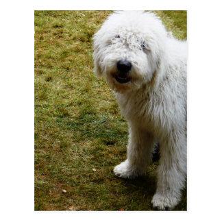 Fluffy Frizzy Bad Hair Day Dog Postcard