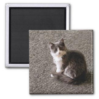 Fluffy kitten. magnet