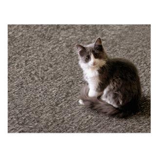 Fluffy kitten. postcard