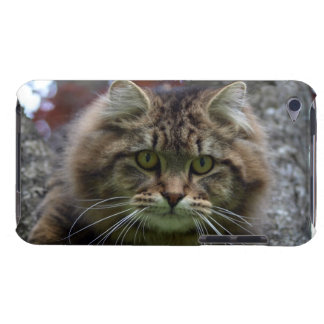 Fluffy Maine Coon Tabby Cat Pet-lovers Phone Case iPod Touch Cases