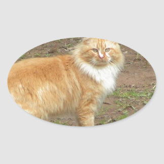 Fluffy Orange and White Kitty Oval Sticker