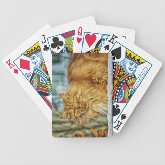 Fluffy Orange Manly Cat Bicycle Playing Cards