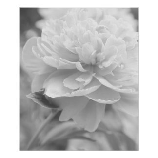 Fluffy Peony Poster