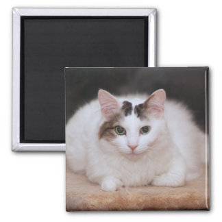 FLUFFY WHITE CAT MAGNET
