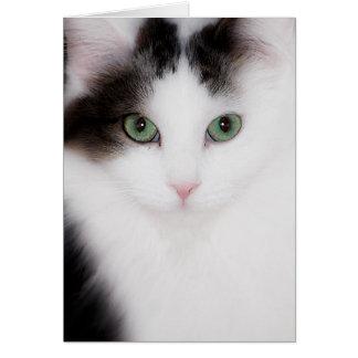 FLUFFY WHITE CAT NOTECARD