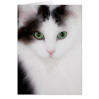 FLUFFY WHITE CAT NOTECARD GREETING CARD