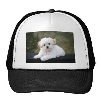 Fluffy White Dog Mesh Hats