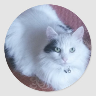 Fluffy white loveable cat classic round sticker