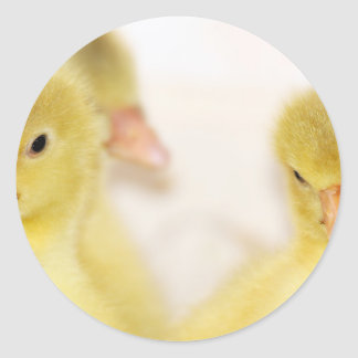 Fluffy Yellow Ducklings Classic Round Sticker