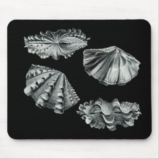 Fluted Giant Clam Mouse Pad