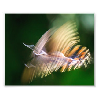 Flutterby Photo Print