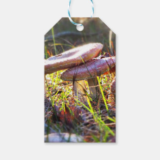 Fly Amanita in the Woodlands Gift Tags