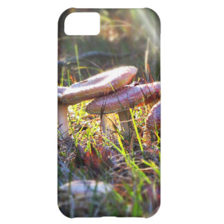 Fly Amanita in the Woodlands iPhone 5C Case