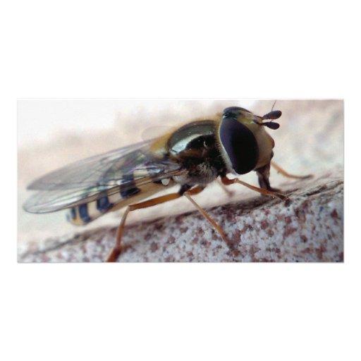 fly Macro Photo Card Template