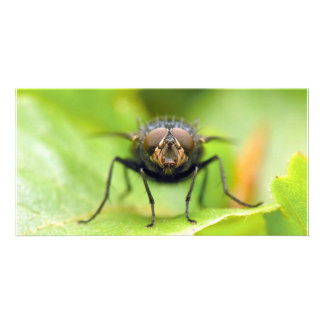 Fly On A Leaf Picture Card