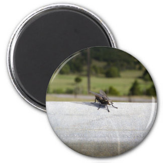Fly On A Rail 6 Cm Round Magnet