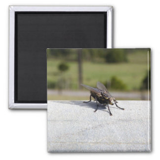Fly On A Rail Square Magnet