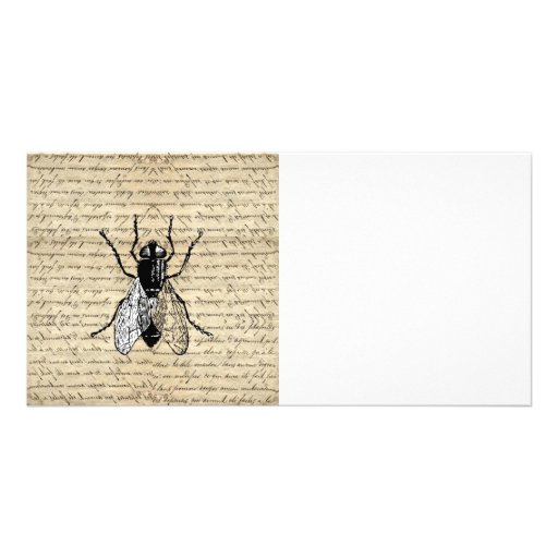 Fly on a vintage background photo greeting card
