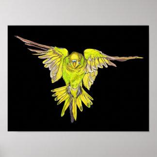 Flying Australian Budgie Bird Parakeet Poster
