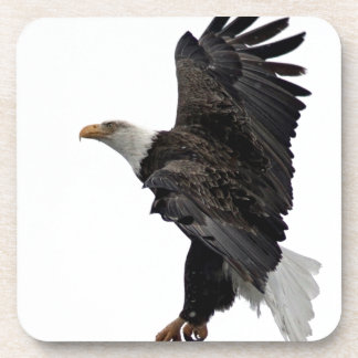 Flying Bald Eagle Coaster