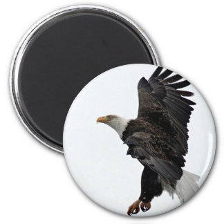 Flying Bald Eagle Magnet