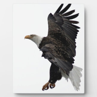 Flying Bald Eagle Plaque