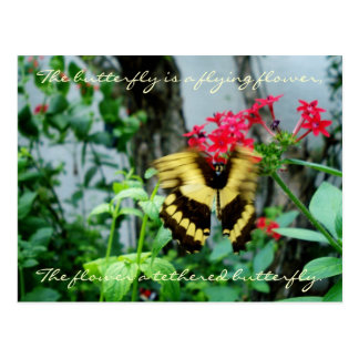 Flying Butterfly Postcard / Quote