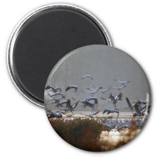 Flying cranes magnet
