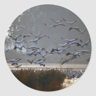 Flying cranes on a lake classic round sticker