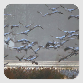 Flying cranes on a lake square sticker
