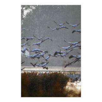 Flying cranes on a lake stationery