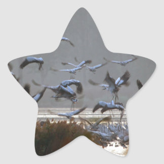 Flying cranes star sticker