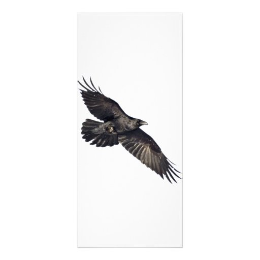 Flying Crow Custom Rack Card