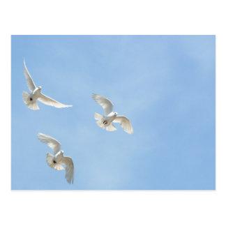 Flying doves postcard