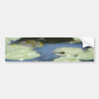 flying dragonfly bumper sticker