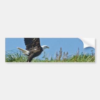 Flying Eagle Bumper Sticker