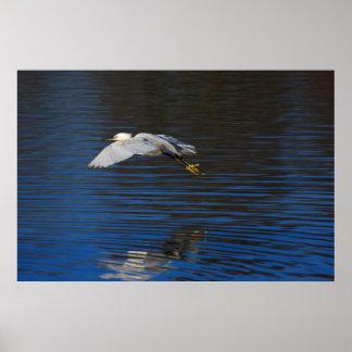Flying Egret Print