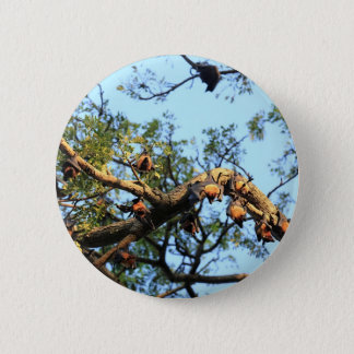 Flying fox fruit bat colony in trees 6 cm round badge