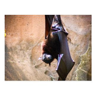 Flying Foxes-Fruit bat postcard