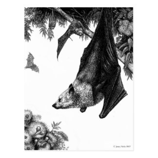 Flying Foxes Postcard