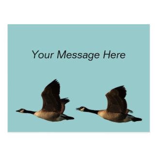 Flying Geese Postcard