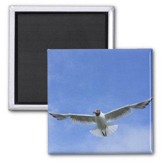 flying gull magnet