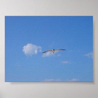 Flying Gull Print