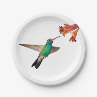 Flying hummingbird paper plates. paper plate