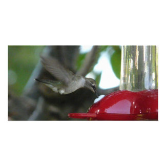 flying hummingbird picture card