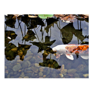 Flying Koi Postcard